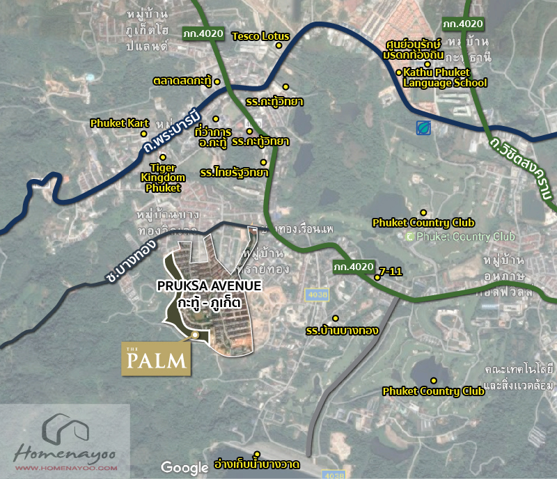 map-palm-plant-katu-patong-02
