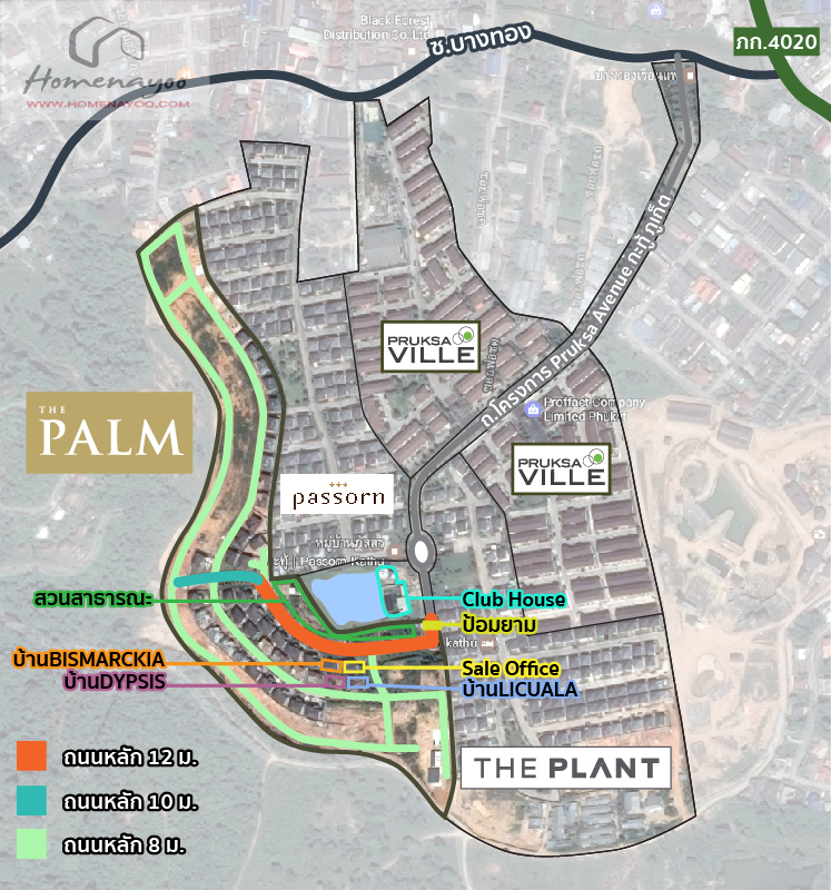 map-palm-plant-katu-patong-03