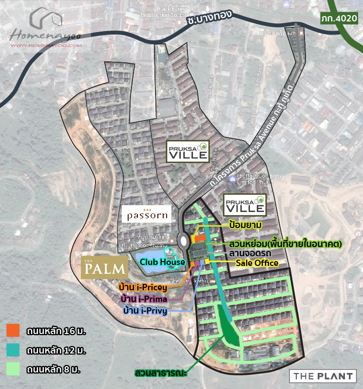 map-palm-plant-katu-patong-04