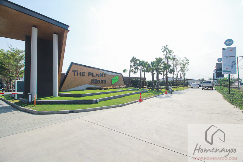 The Plantวว-ลลก-ค2-นคกRE-7