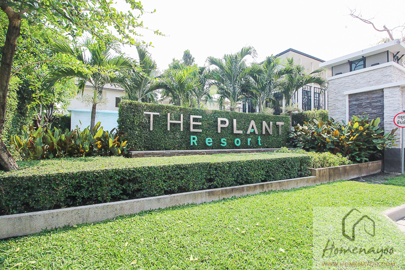 The Plant Resort-ตคกRE-6