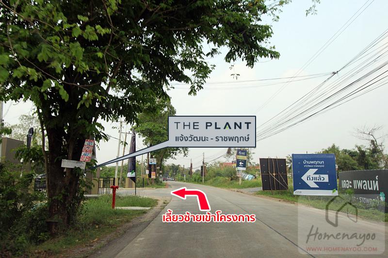 the plant ch-rpIMG_4746 copy